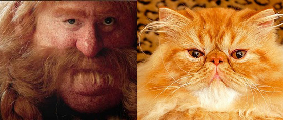 Bombur and big orange cat