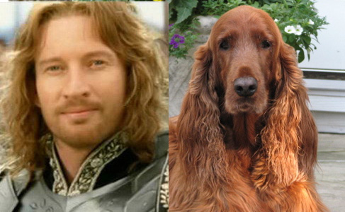 Faramir and an Irish Setter