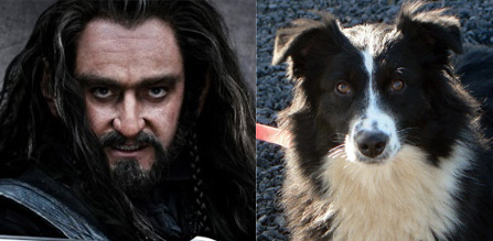 Thoren Oakenshield and an Australian Shepherd