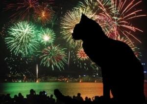 cat fireworks